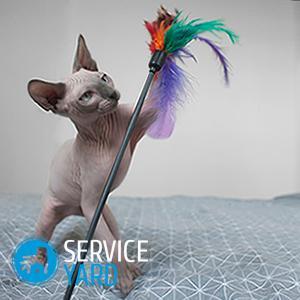 Как сделать лоток для кошки своими руками?