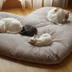 Кроватка для кошки своими руками