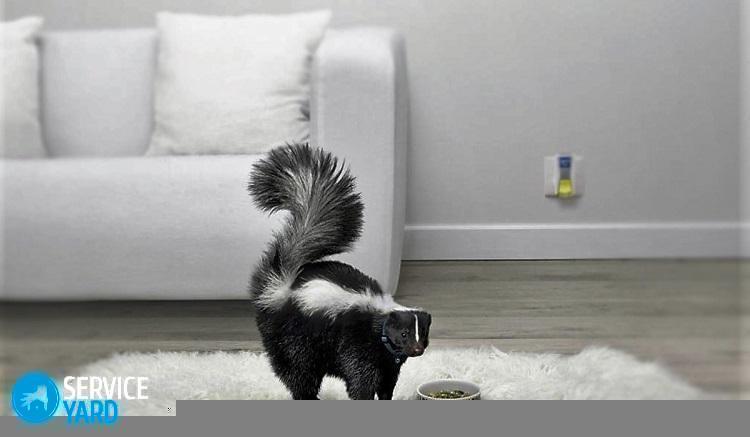 Как вывести запах с дивана; если вырвало, чем очистить, как удалить - Уборка в квартире