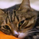 Кошка гадит на кровать — что делать?