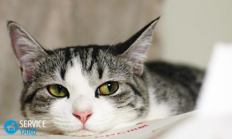 Кот дерет диван - что делать