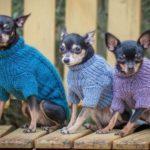 Одежда для собак своими руками — выкройки