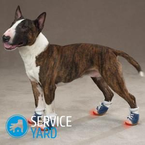 Обувь для собак своими руками - выкройки 9acb2ebc8d8
