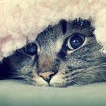 Как вывести блох у кота?