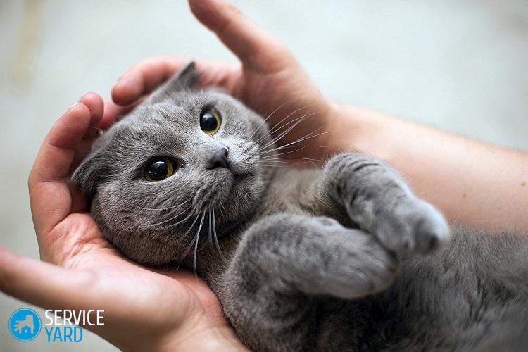 Cats_Grey_Hands_Paws_Cute_526623_1280x854