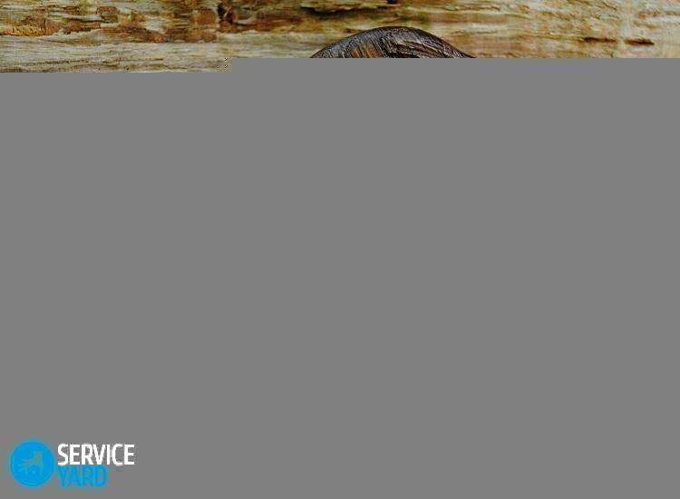 derevyannyy-grebeshok-1