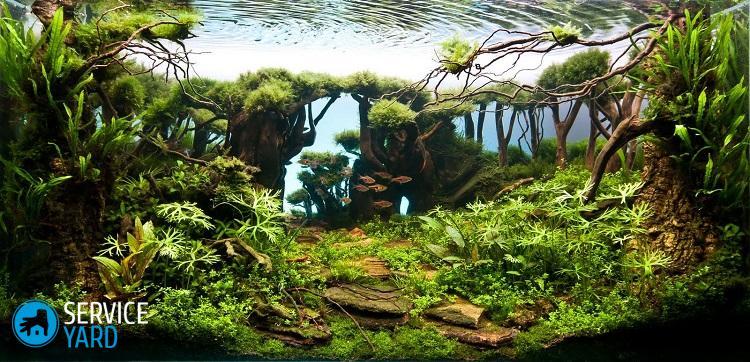 podvodny_les