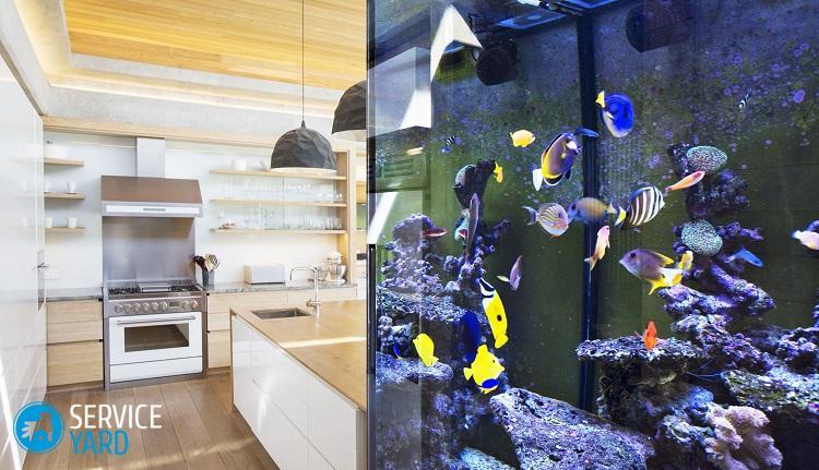 tropical-fish-swimming-in-aquarium-outside-kitchen-568518895-59919e74af5d3a001140ccf1