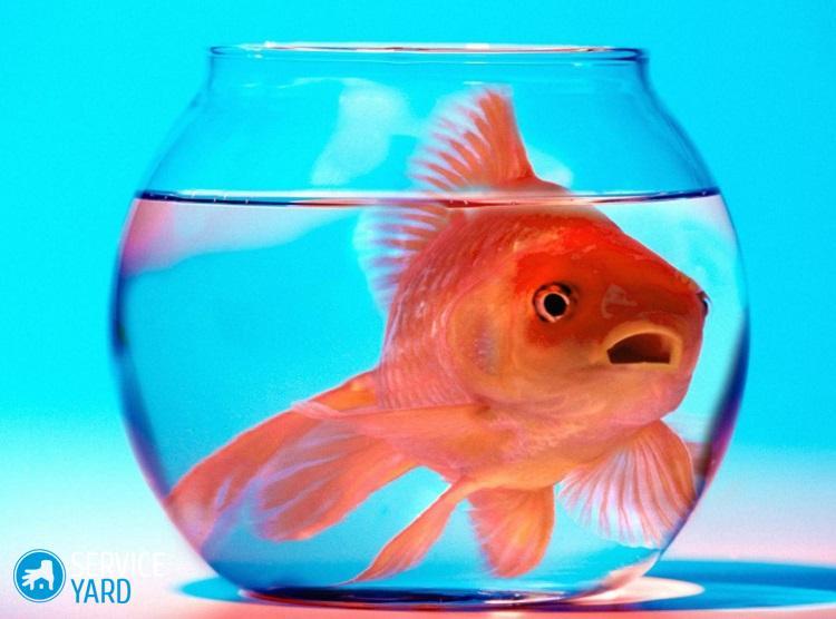 Каких рыбок выбрать для аквариума