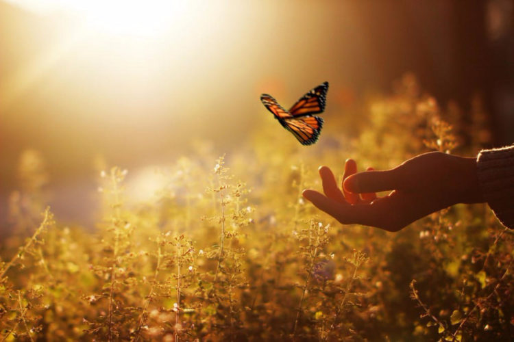 Пословицы про доброту: 50 поговорок со смыслом ✍