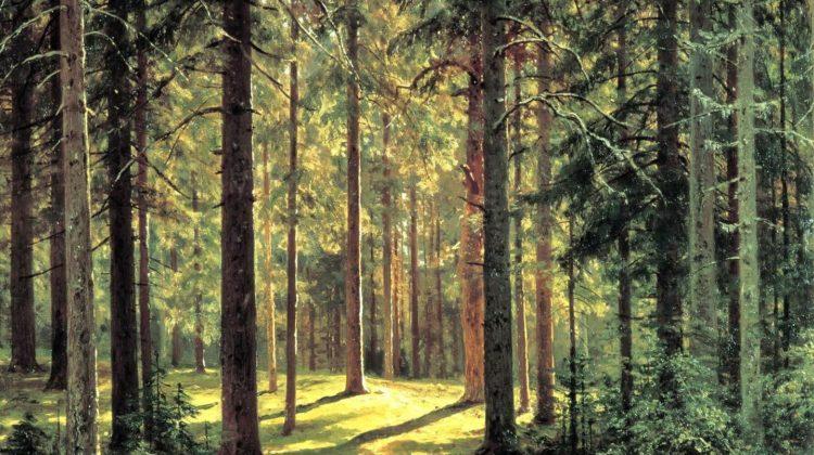 Пословицы про лес: 50 поговорок со смыслом ✍