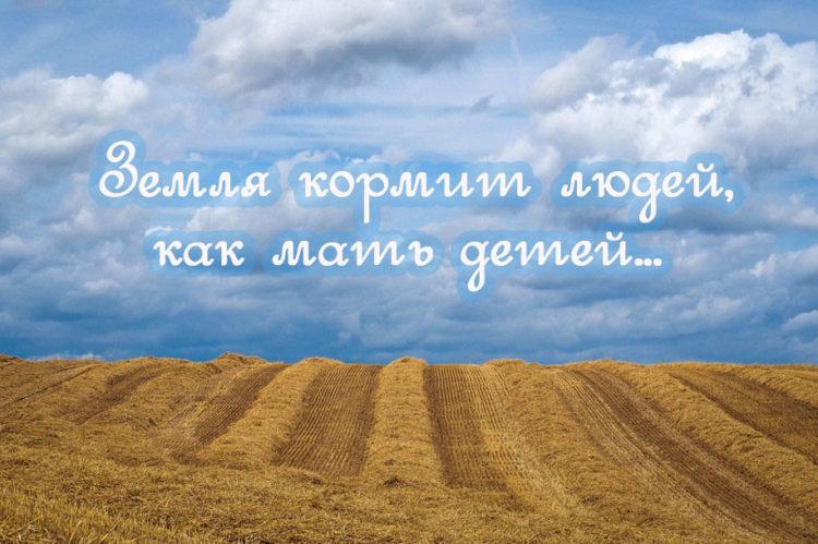 Пословицы про землю русскую: 50 поговорок со смыслом ✍