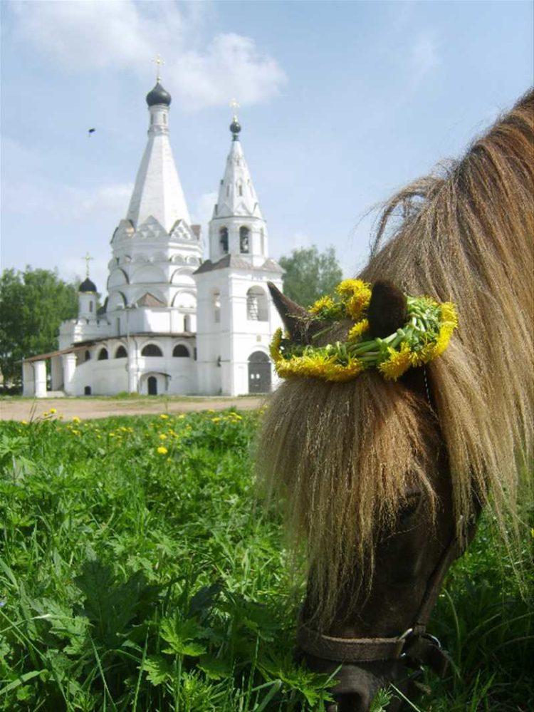Конный двор в Красном-на-Волге