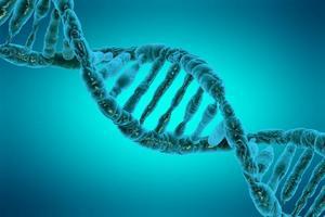 ДНК-тесты — для чего нужны и как сдают анализ на отцовство